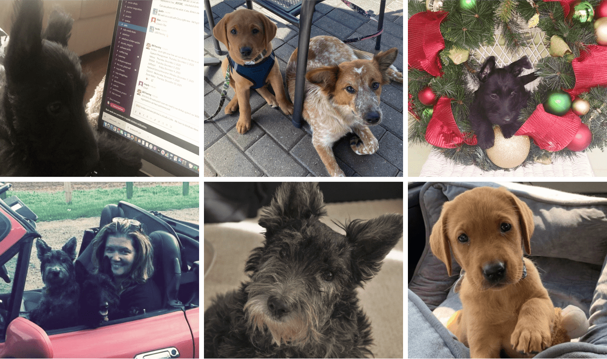 Dogs of ThisWay Global